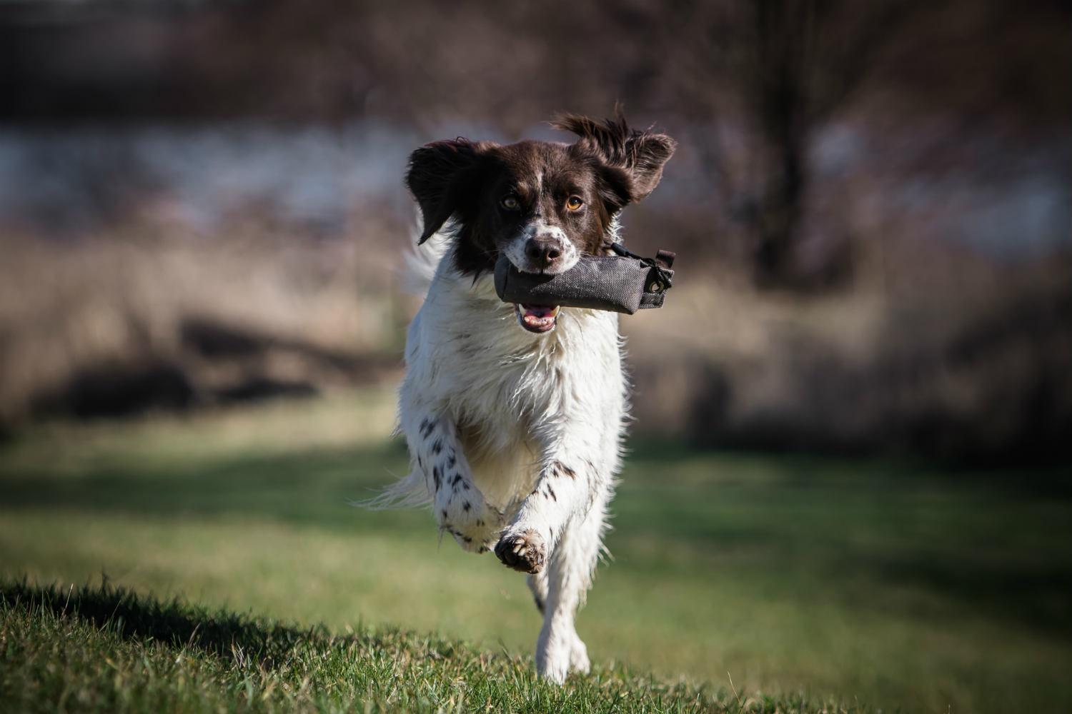 Why a standard hunting dog trial ' new style ' - Drentsche